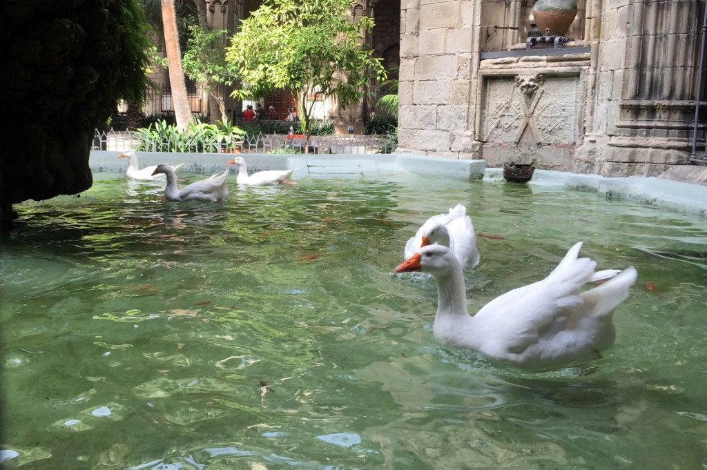 Geese at Cathedral of Barcelona